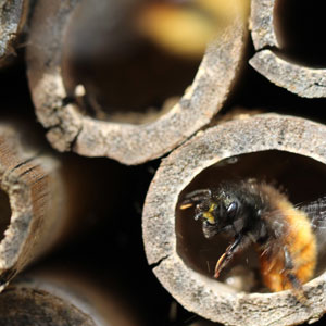 a close up image of a Bee-Hotel